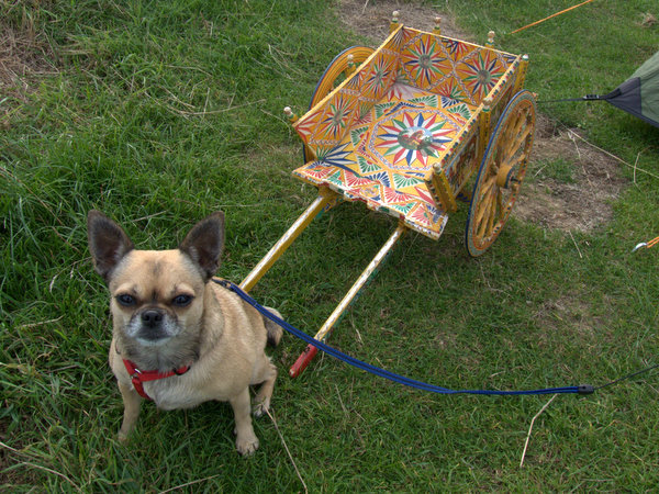 Lola with Italian Lemon cart